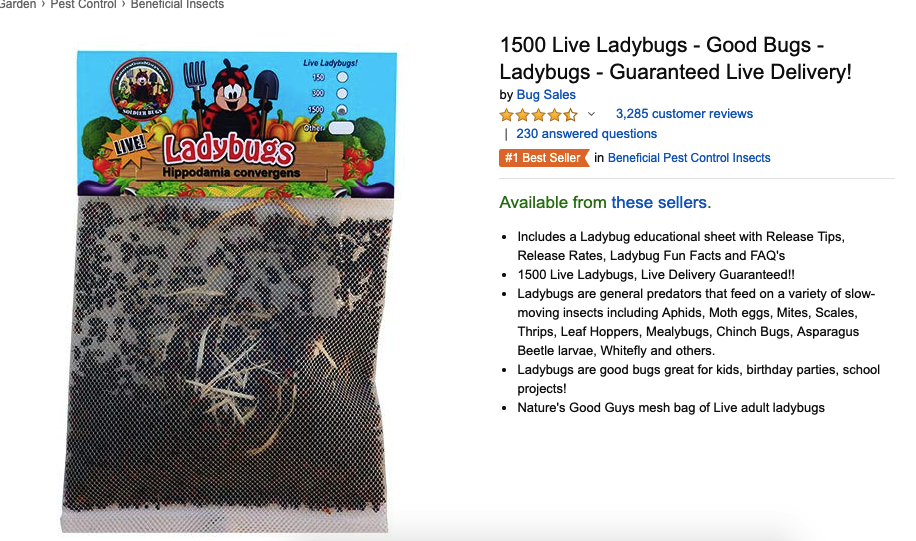 Screenshot of actual, live ladybugs for sale on Amazon